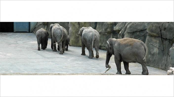 CDU begrüßt Tierheimkompromiss